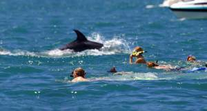 Bay of Islands dolphin eco encounter.
