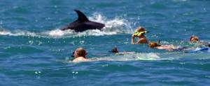 One of the most popular things to do in Bay of Islands is swim with dolphins.